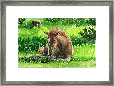 Napping Alberta Wild Foal Framed Print