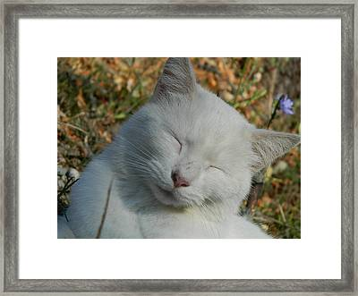 Napping Barn Cat Framed Print by Kathy Barney