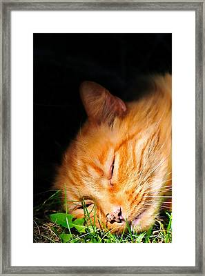 Napping In The Sun Framed Print