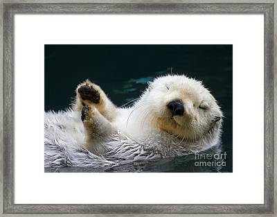 Napping On The Water Framed Print