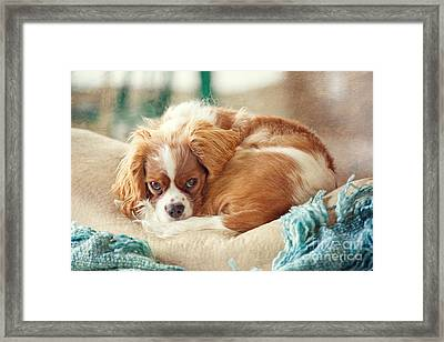 Napping Puppy Framed Print by Kay Pickens