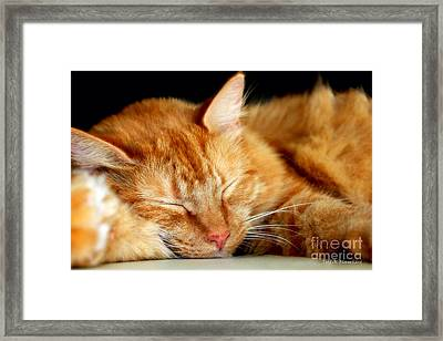 Framed Print featuring the photograph Naptime by Todd Blanchard