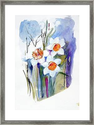 Narcissi Framed Print by Sibby S