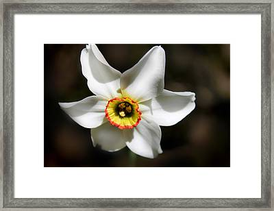 Narcissus I Framed Print by Aya Murrells