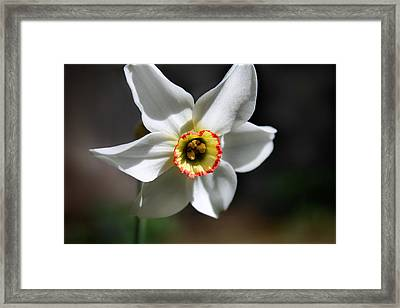 Narcissus II Framed Print by Aya Murrells