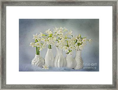 Narcissus 'paperwhites' Framed Print by Jacky Parker