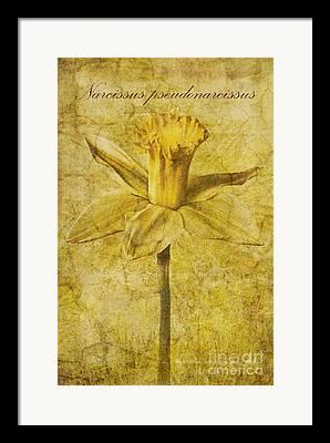 Windflower Framed Prints