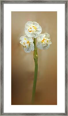 Narcissus Soft Framed Print by Lutz Baar