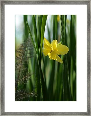 Narcissus Tripartite With Bronze Fennel Framed Print by Rebecca Sherman