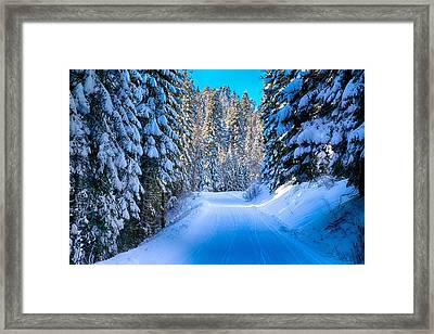 Narrow Road In The Forest Framed Print by Lynn Hopwood