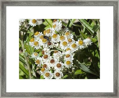 Narrow Waisted Flower Sucker Framed Print