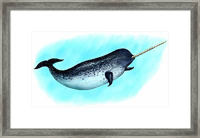 Narwhal Whale Framed Print by Roger Hall