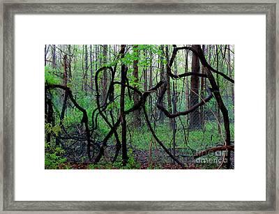 Nas Vine Framed Print by Joshua Bales