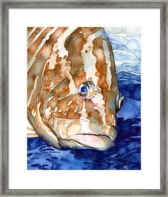 Nassau Grouper Portrait Framed Print