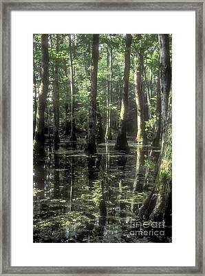Natchez Trace Cypress Framed Print by Bob Phillips