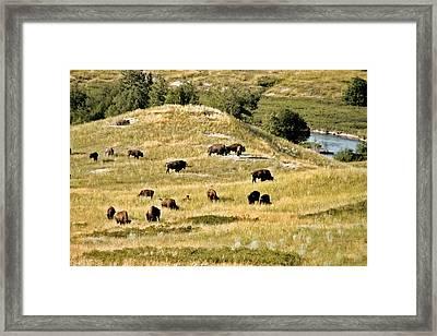 National Bison Range Moiese Mt Framed Print
