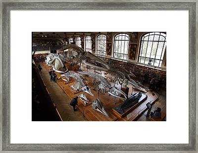 National Museum Of Natural History - Paris France - 011313 Framed Print by DC Photographer