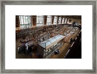 National Museum Of Natural History - Paris France - 011314 Framed Print