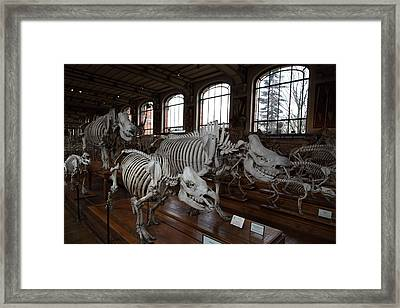 National Museum Of Natural History - Paris France - 01132 Framed Print by DC Photographer