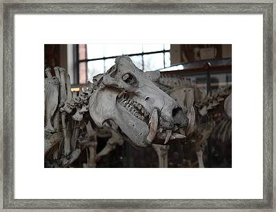 National Museum Of Natural History - Paris France - 01133 Framed Print by DC Photographer