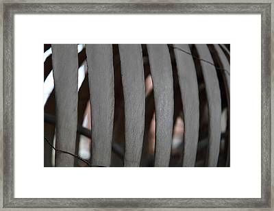 National Museum Of Natural History - Paris France - 01134 Framed Print by DC Photographer