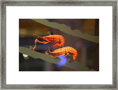 National Museum Of Natural History - Paris France - 011341 Framed Print by DC Photographer