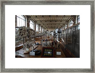 National Museum Of Natural History - Paris France - 01135 Framed Print