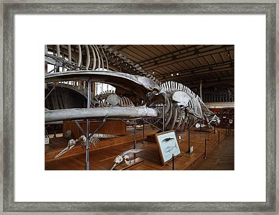 National Museum Of Natural History - Paris France - 01136 Framed Print by DC Photographer