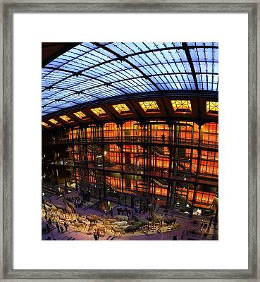 National Museum Of Natural History - Paris France - 011361 Framed Print by DC Photographer