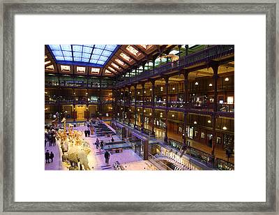 National Museum Of Natural History - Paris France - 011370 Framed Print by DC Photographer