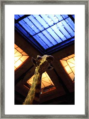 National Museum Of Natural History - Paris France - 011375 Framed Print by DC Photographer