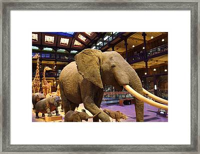 National Museum Of Natural History - Paris France - 011378 Framed Print by DC Photographer