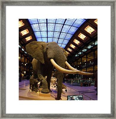 National Museum Of Natural History - Paris France - 011379 Framed Print by DC Photographer