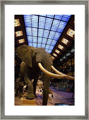 National Museum Of Natural History - Paris France - 011380 Framed Print by DC Photographer