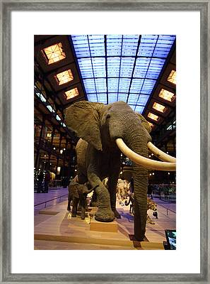 National Museum Of Natural History - Paris France - 011383 Framed Print by DC Photographer