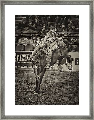 National Stock Show Bare Back Action Framed Print by Priscilla Burgers