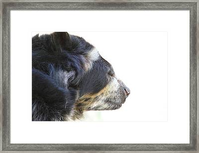 National Zoo - Bear - 01133 Framed Print by DC Photographer