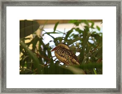 National Zoo - Birds - 011314 Framed Print by DC Photographer