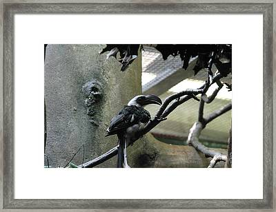 National Zoo - Birds - 121218 Framed Print by DC Photographer