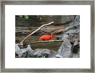 National Zoo - Birds - 121223 Framed Print by DC Photographer