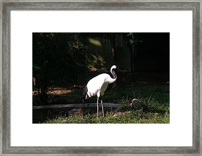 National Zoo - Birds - 12125 Framed Print by DC Photographer