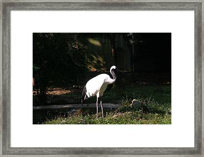 National Zoo - Birds - 12126 Framed Print