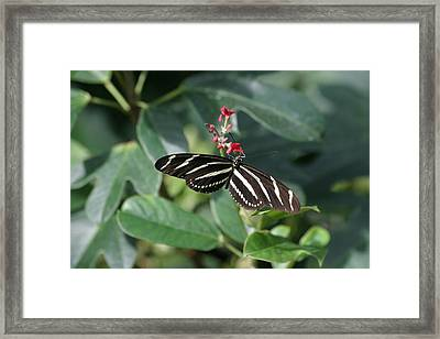 National Zoo - Butterfly - 12121 Framed Print by DC Photographer