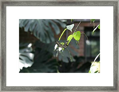 National Zoo - Butterfly - 12124 Framed Print by DC Photographer