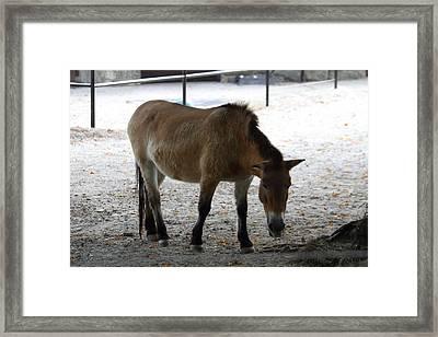 National Zoo - Donkey - 01131 Framed Print