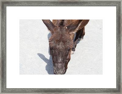 National Zoo - Donkey - 01132 Framed Print