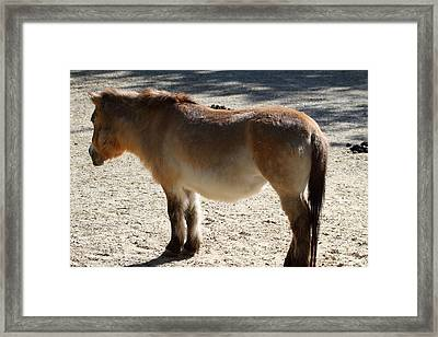 National Zoo - Donkey - 01134 Framed Print by DC Photographer
