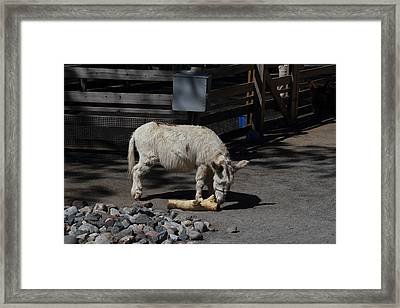 National Zoo - Donkey - 01135 Framed Print by DC Photographer