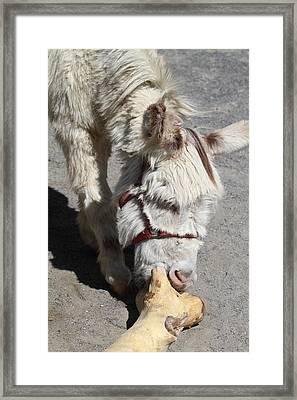 National Zoo - Donkey - 01138 Framed Print