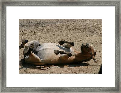 National Zoo - Donkey - 12129 Framed Print by DC Photographer